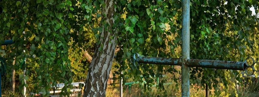 крест, дерево