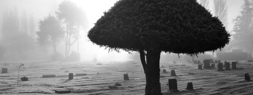 кладбище, дерево, туман