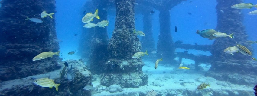 мемориальный риф
